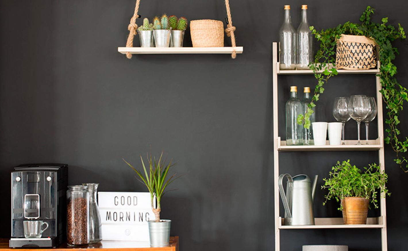 Plantas para decoração de Interiores: Como escolher?