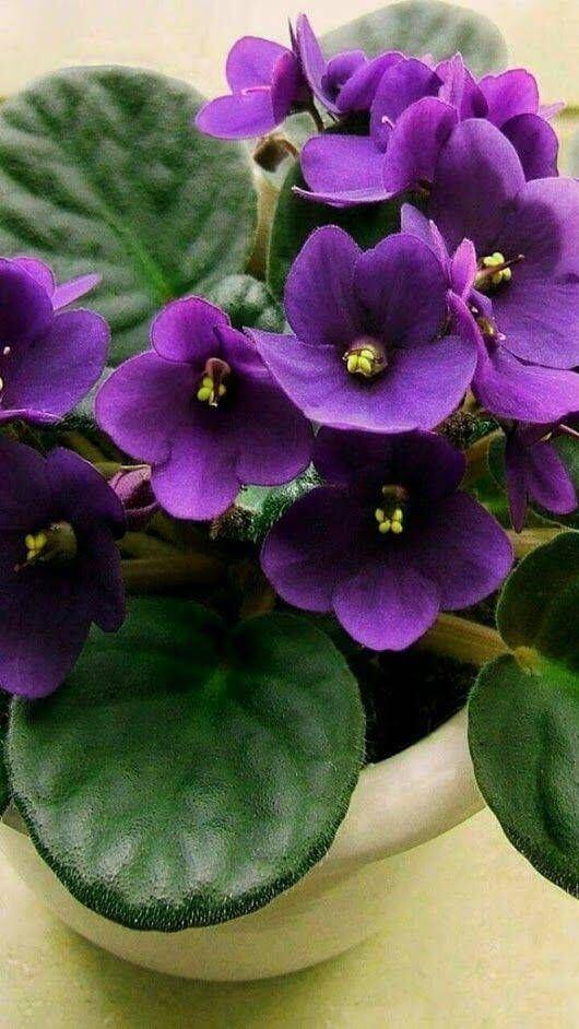 vaso de flor violeta