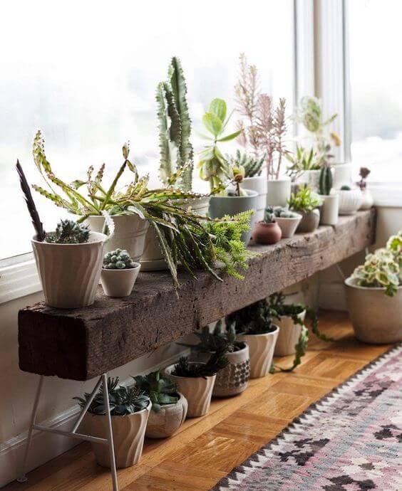vasos de plantas em cima de tronco rústico próximo a janela