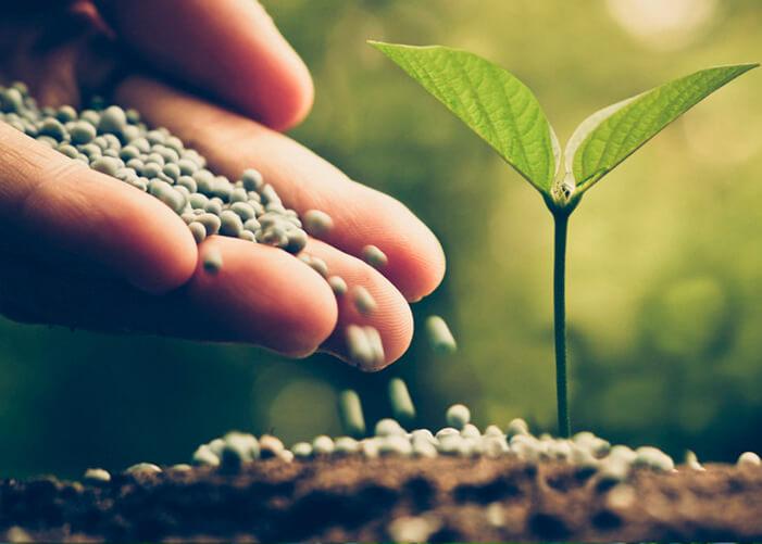 Mãos colocando fertilizante em plantinha