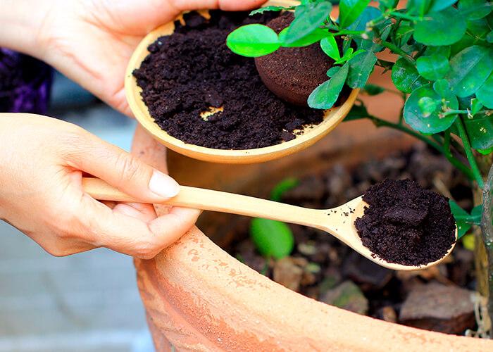 Mãos colocando colher de borra de café em vaso de planta