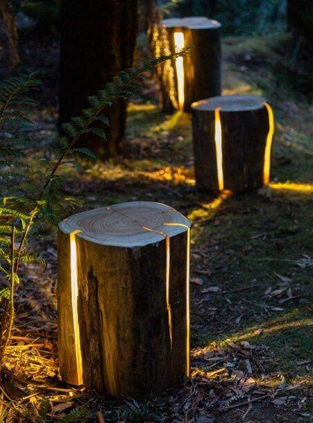 Tronco de árvore iluminado fazendo um caminho