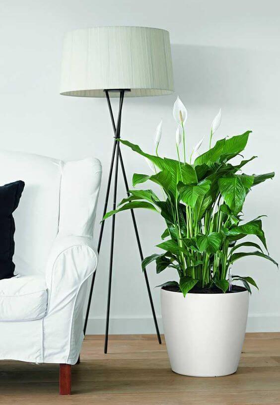 Metade de um sofá branco aparecendo com abajur e vaso da flor de Lírio da Paz em branco