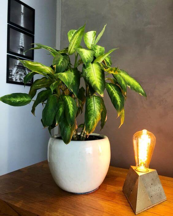 Flor comigo ninguém pode em um vaso branco apoiado em mesa de madeira ao lado uma luminária de concreto com lâmpada acesa.