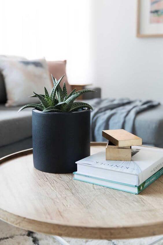 planta babosa em foco no vaso preto em cima de mesinha redonda