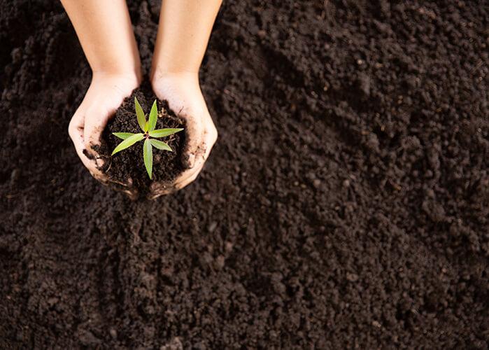 mãos plantando mudinha de árvore na terra