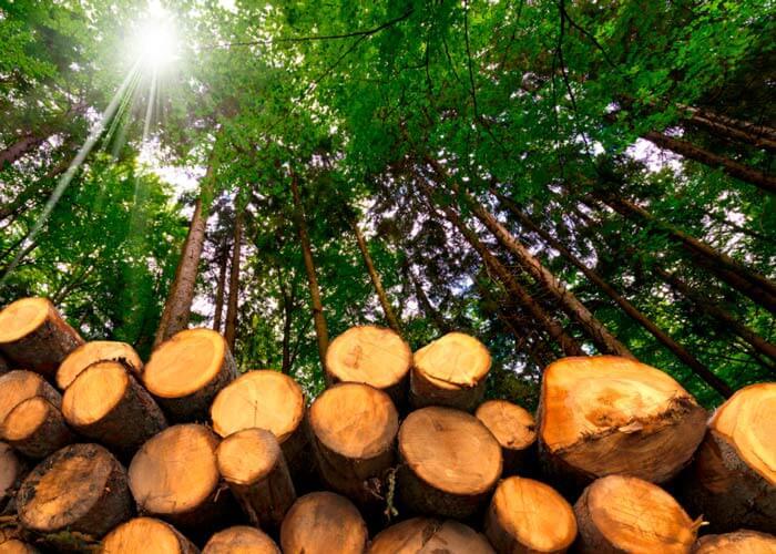 torras de madeira